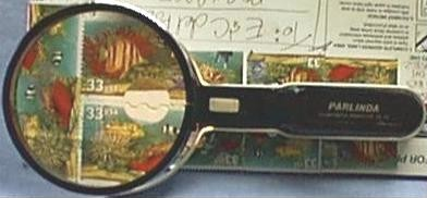 Twin Power Magnifying Lens